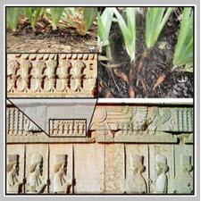 A New Approach to Stone-reliefs of Persepolis[taliem.ir]