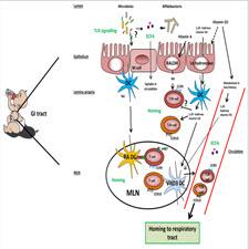 Cow's Milk and immune Function-taliem-ir