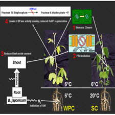 Effects on both the roots and shoots of soybean during dark chilling determine[taliem.ir]