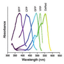Fluorescence microscopy[taliem.ir]