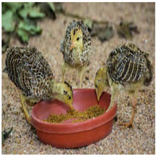 Group Treatment Strategies for Animals-taliem-ir