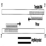 Inter simple sequence repeat (ISSR) polymorphism and its application in[taliem.ir]
