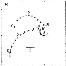 Strategies for active camouflage of motion