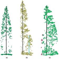 three_types_tree_segments