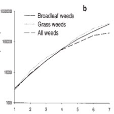 WEED COMPETITION IN MAIZE CROP UNDER DIFFERENT[taliem.ir]