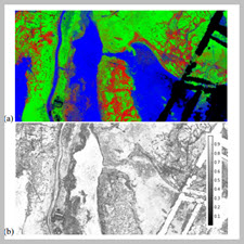WILL IT BLEND? VISUALIZATION AND ACCURACY EVALUATION OF HIGHRESOLUTION FUZZY VEGETATION MAPS