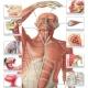 anatomi-taliem-ir
